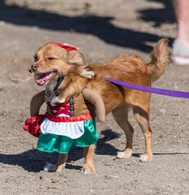 Games contests san clemente oktoberfest 2017 october 21st do you want to show off your wiener what better place to do it than oktoberfest we will be hosting a wiener dog walk off on the red solutioingenieria Images